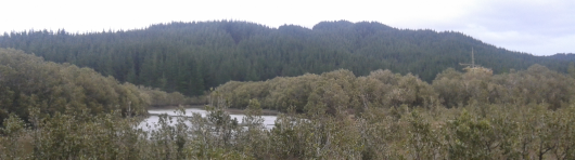 Tapuwae forest