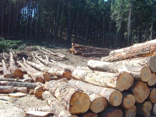 Domestic logs